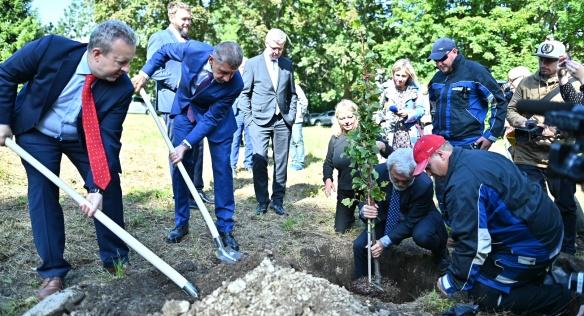 Společně s ministry Brabcem a Havlíčkem premiér Babiš a starosta Buřt vysadili v Horním Jiřetíně tři nové lípy, 18. září 2019.